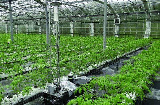 El robot GreenPatrol creado para incrementar las cosechas